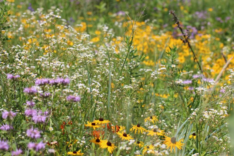 toadshade wildflower farm