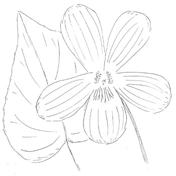 Buck's County Magenta Violet Drawing